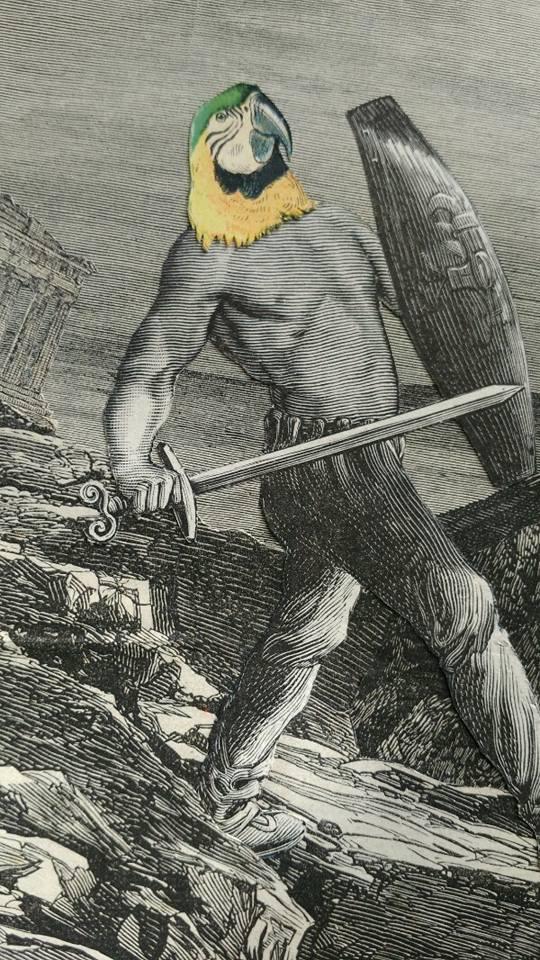 Harassés - Ara à tête jaune