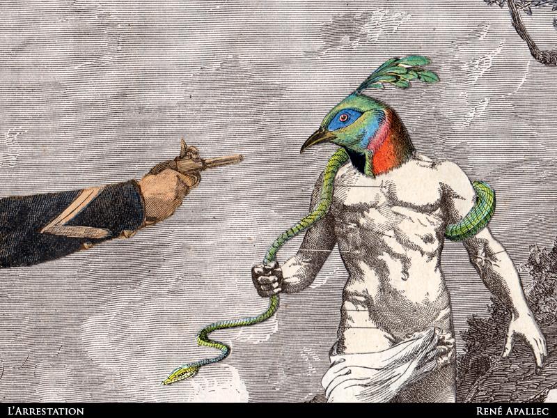 arrest-bird